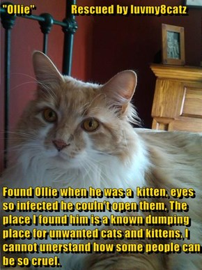 """Ollie""                Rescued by luvmy8catz  Found Ollie when he was a  kitten, eyes so infected he couln't open them, The place I found him is a known dumping place for unwanted cats and kittens, I cannot unerstand how some people can be so cruel."
