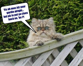 disgusted neighbourkitty is disgusted...