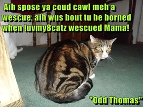 "Aih spose ya coud cawl meh a wescue, aih wus bout tu be borned when luvmy8catz wescued Mama!  ""Odd Thomas"""