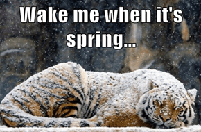 Wake me when it's spring...
