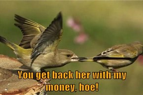 You get back her with my money, hoe!