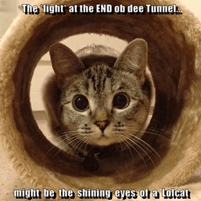 The *light* at the END ob dee Tunnel..  might  be  the  shining  eyes  of  a  Lolcat