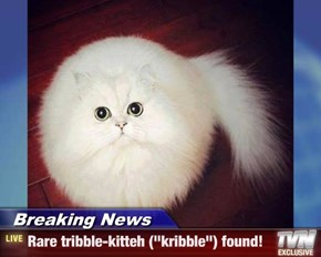 "Breaking News - Rare tribble-kitteh (""kribble"") found!"