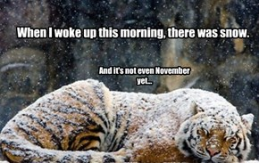 When I woke up this morning, there was snow.