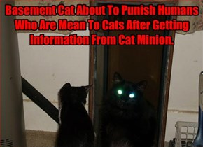 Basement Cat About To Punish Humans Who Are Mean To Cats After Getting Information From Cat Minion.