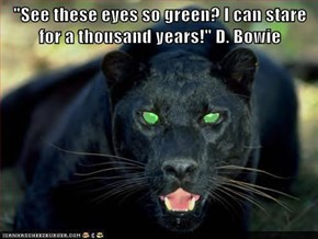 """See these eyes so green? I can stare for a thousand years!"" D. Bowie"