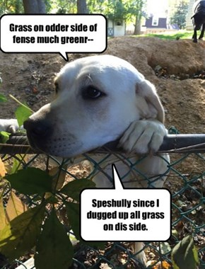 Dogs Are Pessimistic for Different Reasons