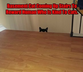 Basement Cat Coming Up Stairs To Reward Human Who Is Kind To Cats.