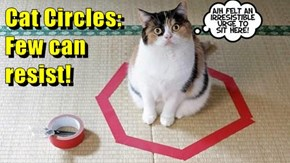 Cat Circles:                                                                                                                                          Few can                                                                resist!
