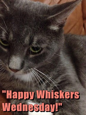 """""""Happy Whiskers Wednesday!"""""""
