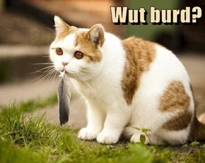 Wut burd?