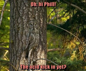 Oh, hi Phill!  The acid kick in yet?