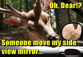 Oh, Dear!?  Someone move my side view mirror...