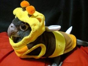 A Bird as a Bee