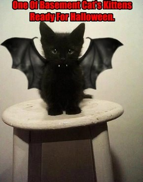 One Of Basement Cat's Kittens Ready For Halloween.