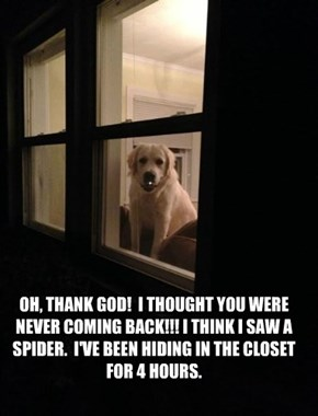 OH, THANK GOD!  I THOUGHT YOU WERE NEVER COMING BACK!!! I THINK I SAW A SPIDER.  I'VE BEEN HIDING IN THE CLOSET FOR 4 HOURS.