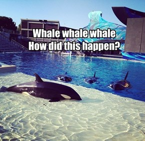 Whale whale whale How did this happen?