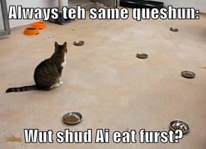 Always teh same queshun:  Wut shud Ai eat furst?