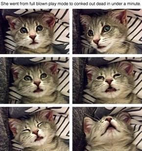 Narcoleptic Kitten