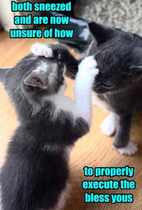 Kittens Trying to be Purrlitically Correct