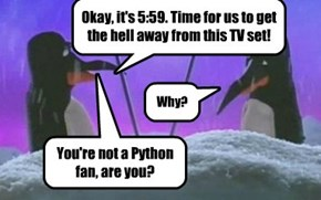 No penguin has expected it for 45 years (happy aniversary, Monty Python)