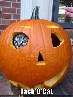 Jack'O'Cat