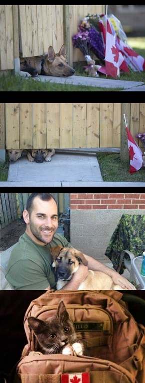 Nathan Cirillo's Dogs Wait For Master To Return (Huffington Post)