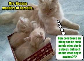 Mrs. Nonono wonders to herselfs..