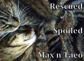 Rescued Spoiled Max n Taeo