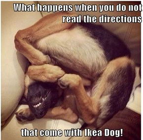 What happens when you do not read the directions  that come with Ikea Dog!
