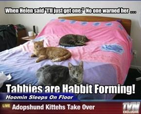 Hoomin Sleeps On Floor - Adopshund Kittehs Take Over