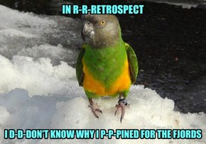 The Parrot Kvetch