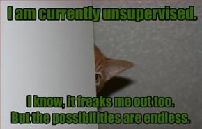 Sneaky Cat Is Sneaky