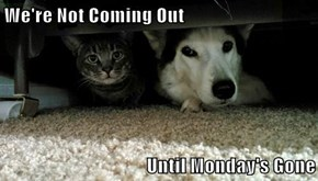 We're Not Coming Out   Until Monday's Gone