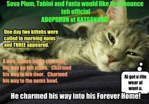 Adopshund Bai Sova Plum 3