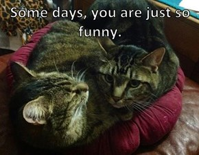 Some days, you are just so funny.