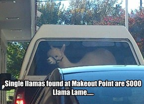 Single llamas found at Makeout Point are SOOO  Llama Lame.....