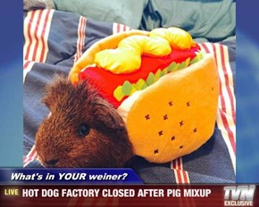 What's in YOUR weiner?   - HOT DOG FACTORY CLOSED AFTER PIG MIXUP