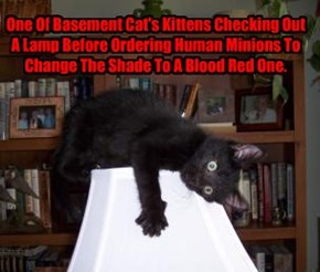 One Of Basement Cat's Kittens Checking Out A Lamp Before Ordering Human Minions To Change The Shade To A Blood Red One.