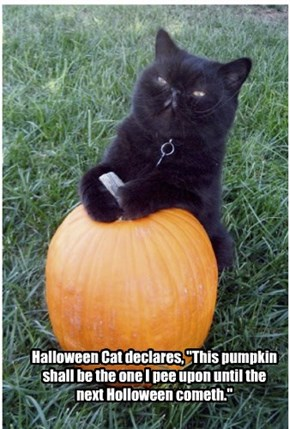 "Halloween Cat declares, ""This pumpkin shall be the one I pee upon until the next Holloween cometh."""