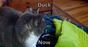 Duck  Now