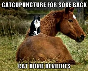 CATCUPUNCTURE FOR SORE BACK   CAT HOME REMEDIES