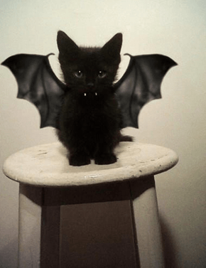 All Ready for Halloween