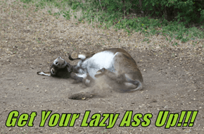 Get Your Lazy Ass Up!!!