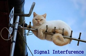 Signal Interfurence