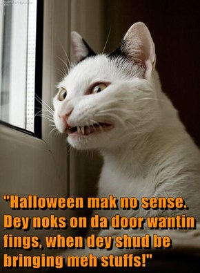 """Halloween mak no sense. Dey noks on da door wantin fings, when dey shud be bringing meh stuffs!"""