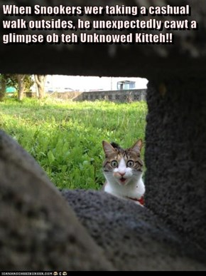 When Snookers wer taking a cashual walk outsides, he unexpectedly cawt a glimpse ob teh Unknowed Kitteh!!