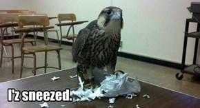 I'z sneezed.