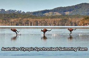 Australian Olympic Synchronised Swimming Team