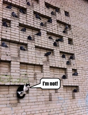 All in all you're just a, 'nother Bird in the wall....